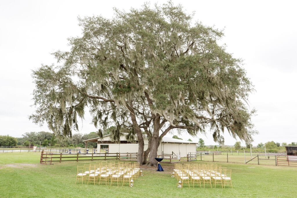 rows of white and gold chairs set up for outdoor wedding ceremony under large oak tree